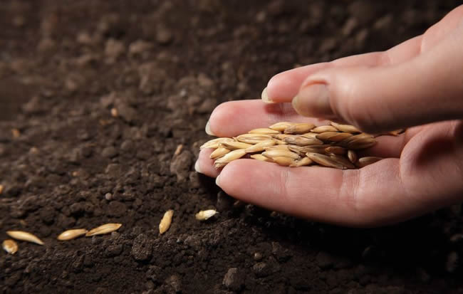 plants good seeds if you want a good harvest. Likewise, think good thoughts if you want a good life. Your thoughts are seeds.